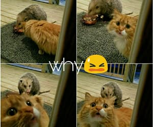 cat, cute, and cry image