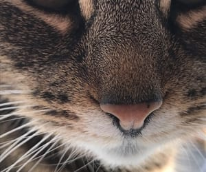 animal, cat, and close up image
