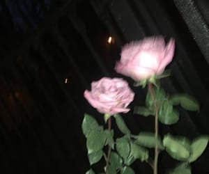 pink, roses, and sad image
