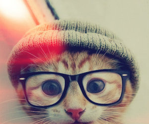 cat, glasses, and animal image