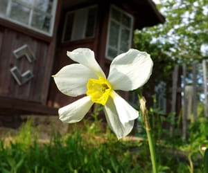 Country House, photography, and flower image