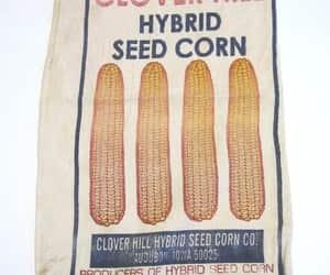 corn, farmhouse, and farm advertising image