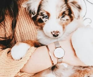 cozy, dog, and puppy image