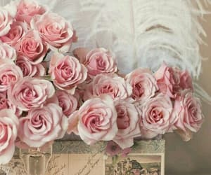 rose, pink, and vintage image