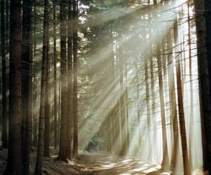 morning, woods, and sunrays image