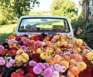 beautiful, flowers, and asthetic image