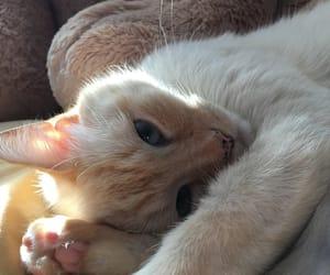 aesthetics, blue eyes, and cat image