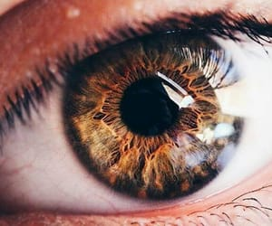 eye, brown, and eyes image