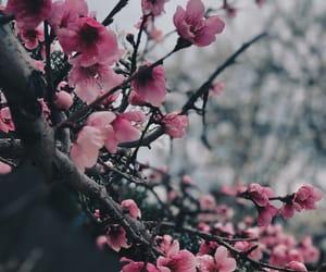 flower, pink, and sakura image