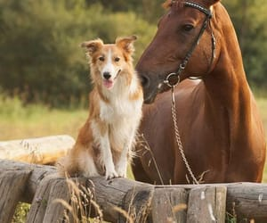 animals, dogs, and friendship image