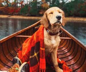 dog, autumn, and cozy image