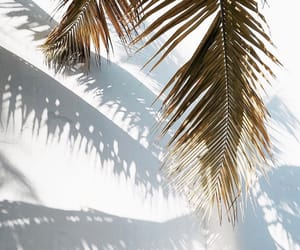 aesthetic, palm tree, and white image