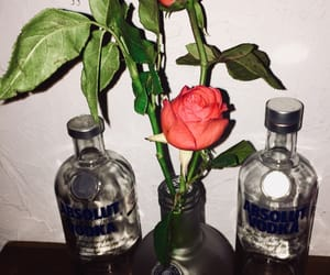 amor, rosas, and vodka image