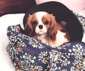 adorable, backpack, and dog image