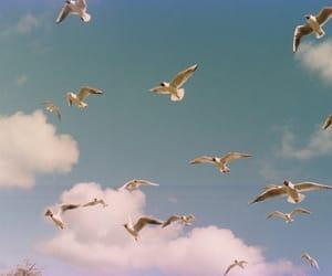 bird, sky, and clouds image