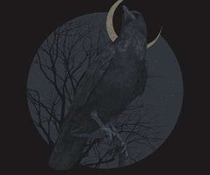 aesthetic, art, and crow image