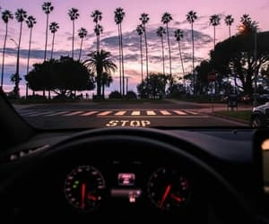 palm trees, car, and palms image