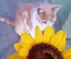 amarillo, summer, and cat image