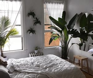 bed, plants, and windows image