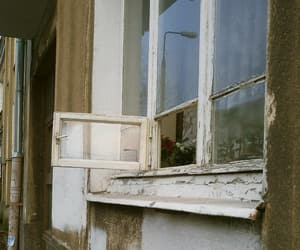 flowers, grunge, and window image