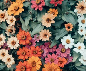 floral, flowers, and orange image
