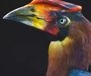 lovebirds, toucans, and animallife image