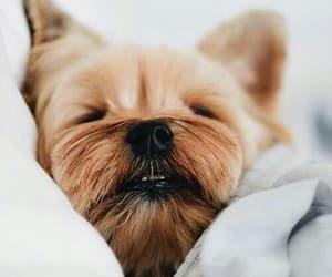 cute animal, tumblr, and cute dog image