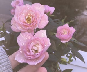 aesthetic, pink rose, and rain image