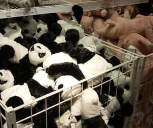 asian, panda, and plushies image