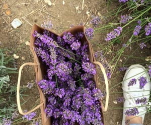 aesthetic, lilacs, and pretty image