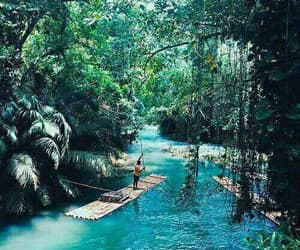 blue, jungle, and bright tropical image