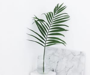 green, minimal, and plants image