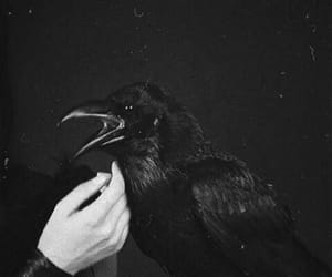black, dark, and raven image