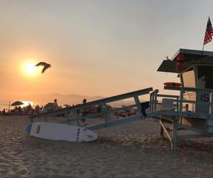 beach, beauty, and bird image