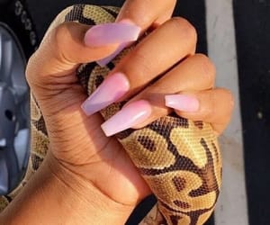 pink, pink nails, and snakes image