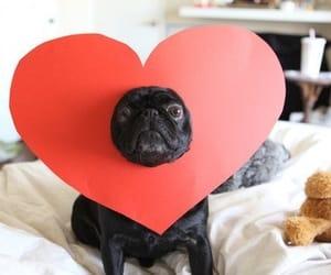 adorable, cool, and dog image