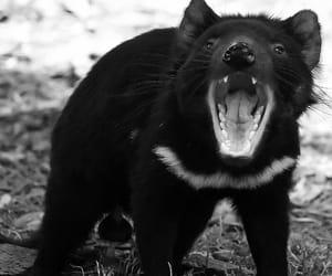 animal, australia, and beautiful image