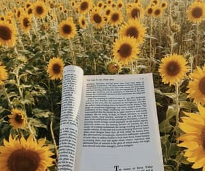 book, sunflower, and yellow image