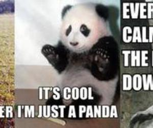 anteater, fuck you, and panda image