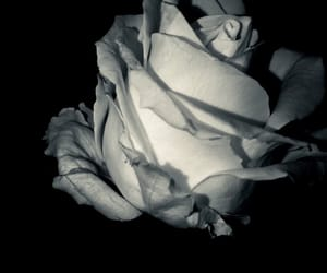 beautiful, black, and white image
