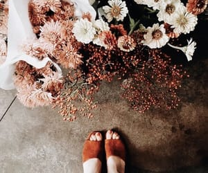 flowers, autumn, and aesthetic image
