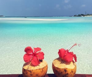 beach, drink, and exotic image