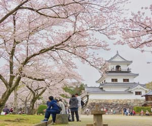 aesthetic, japan, and beauty image