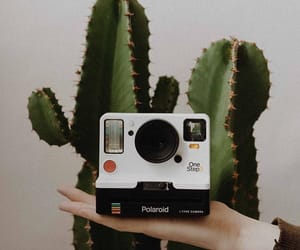 cactus, picture, and stylé image