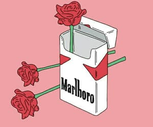 rose, marlboro, and pink image