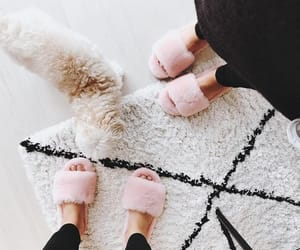 animals, slippers, and dogs image