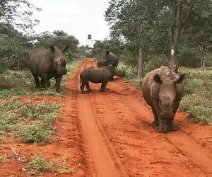 africa and rhino image