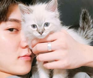 cat, cute, and lucky image