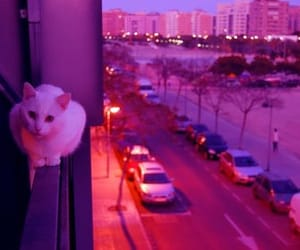 cat, city, and tumblr image