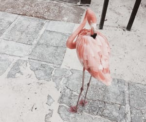 aesthetic, animals, and flamingo image